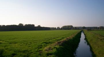 boerengolf2.jpg