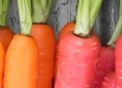 carrots_250_180px.jpg